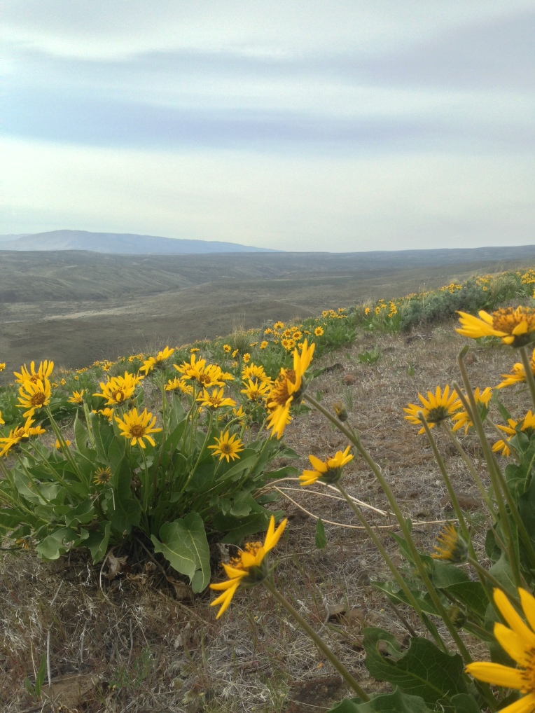 TT50 - 2014 Yakima Skyline 50k - 09 wildflowers