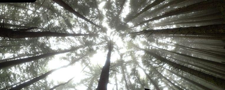 Tiger Mountain Trail