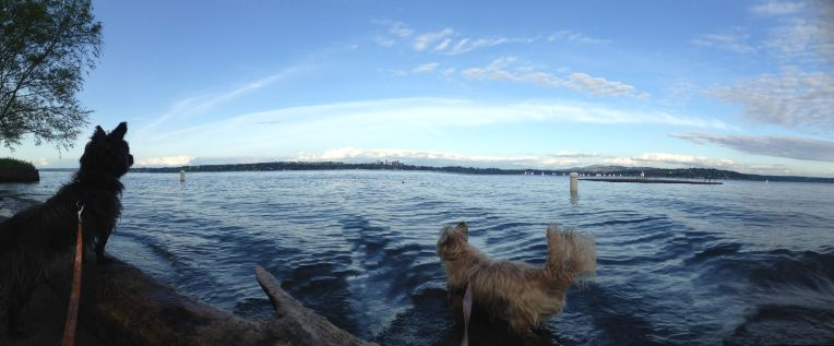 Hunting ducks (unsuccessfully) with leashes on.
