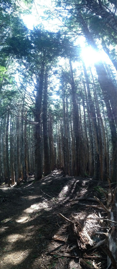 Trail through Mount Muller's Mosley Gap.