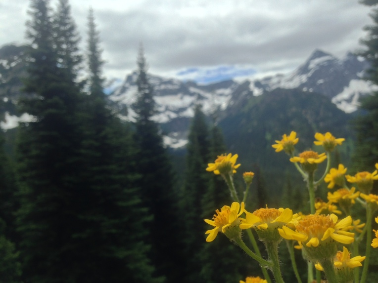Wildflowers are blooming at the North Cascades Rainy Pass.