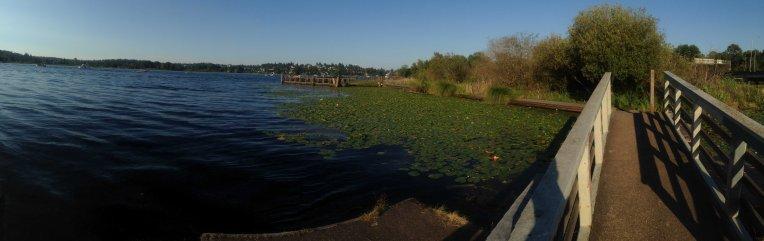 Foster Island floating walk (run?)  ways.