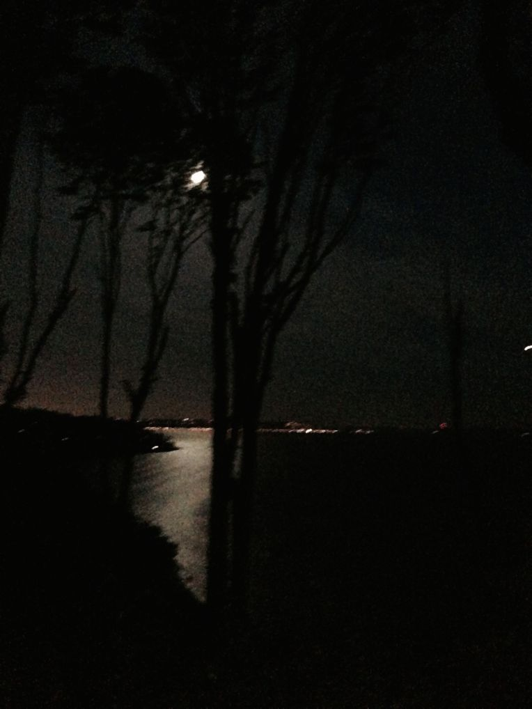 Discovery Park headlamp night run!