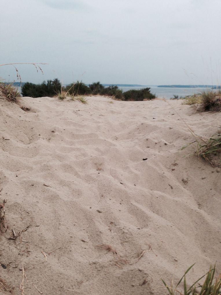 Discovery Park sand dunes.