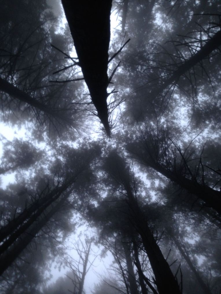 Blanchard Mountain tree tops.