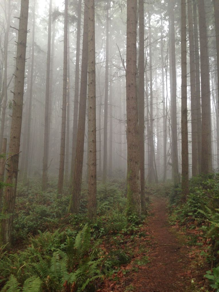 So much fog this year. Cougar Mountain.