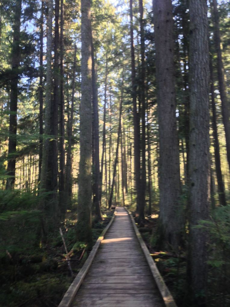Grand Ridge Trail. Issaquah Alps.