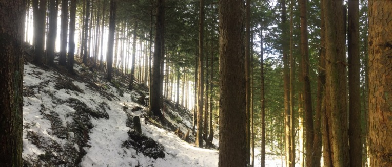 Trail to snowy Tiger 1