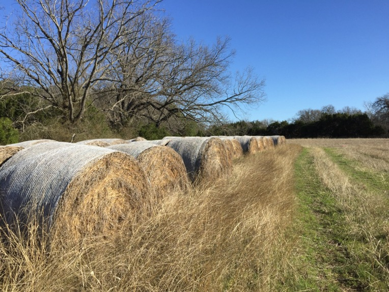 Saddle Blazer hay bales along the course